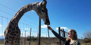 Freiwilligenarbeit Tierschutzprojekte Südafrika